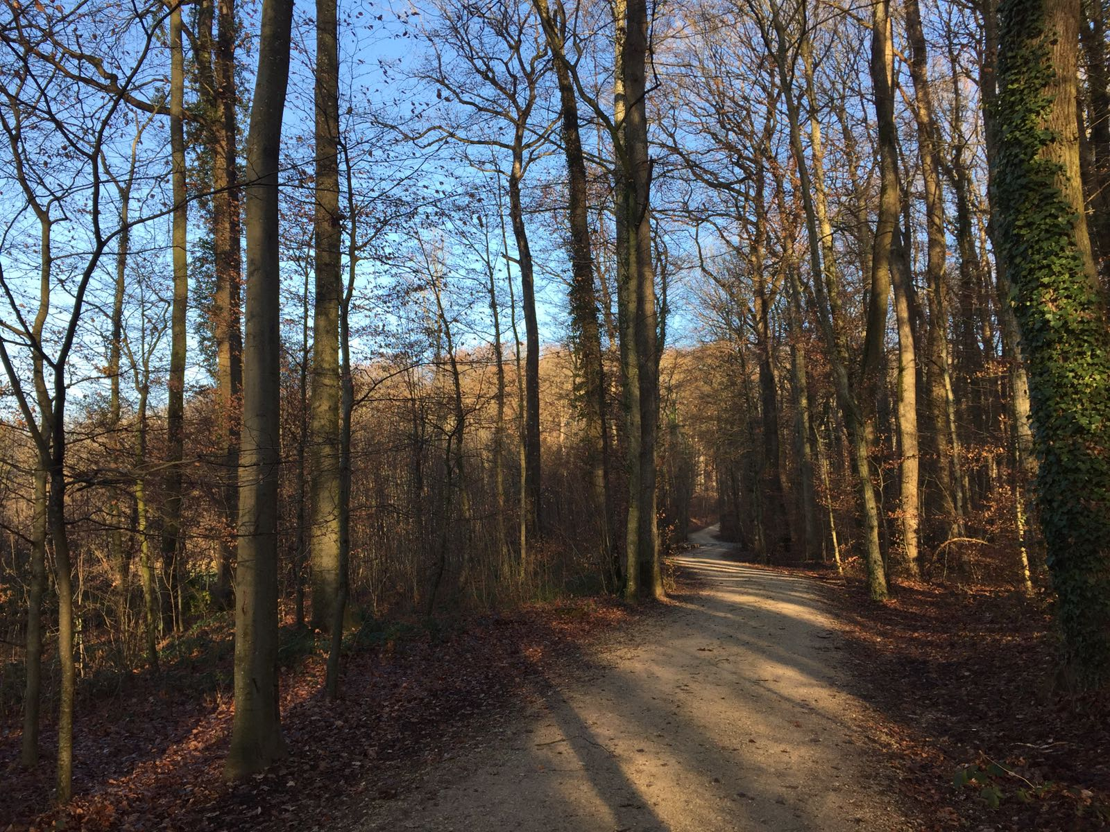 The Pathways of Robin Hood